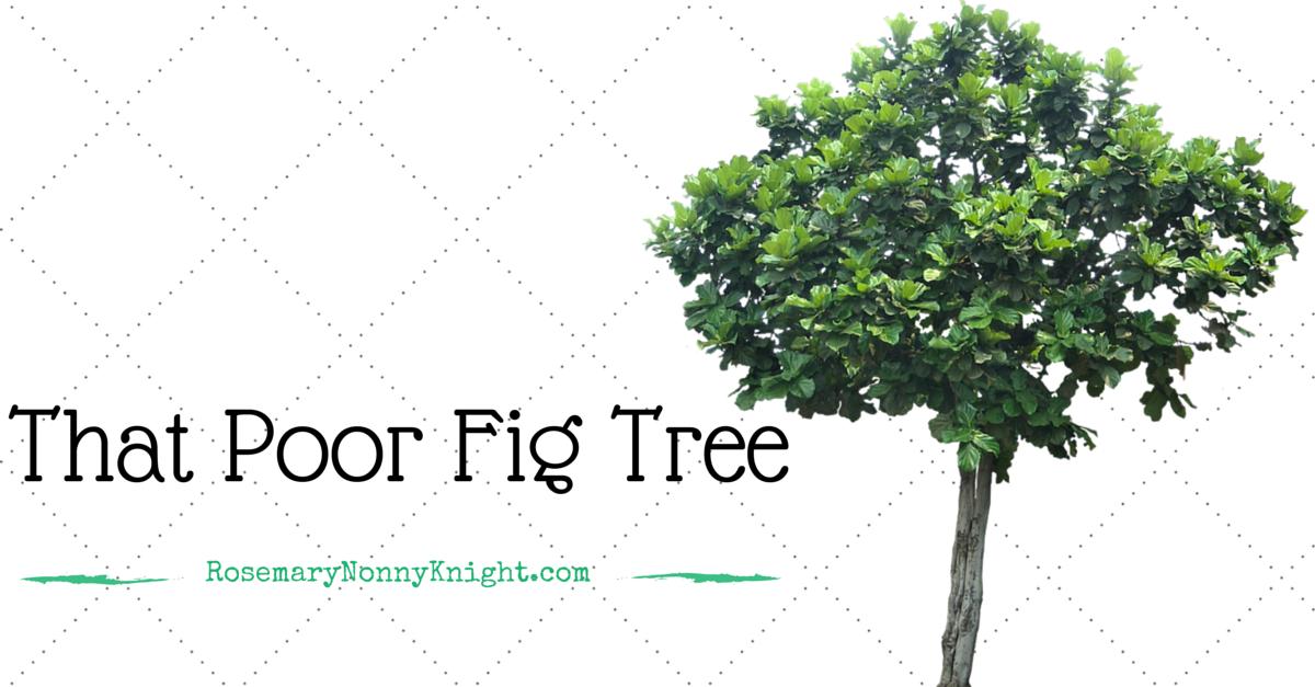 That Poor Fig Tree
